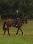 Frankel in the rain in Newmarket David Milnes