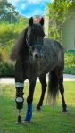 Horse given second chance at life with prosthetic limb